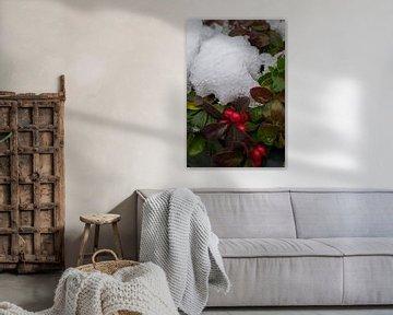 Gaultheria onder de sneeuw von Andrea Ooms