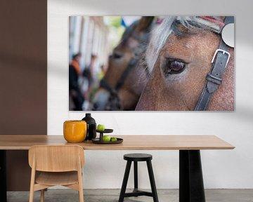 Zeeuwse paarden von Foto Amsterdam / Peter Bartelings