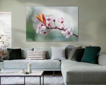 Kirschblüte in der Sonne von Arja Schrijver Fotografie