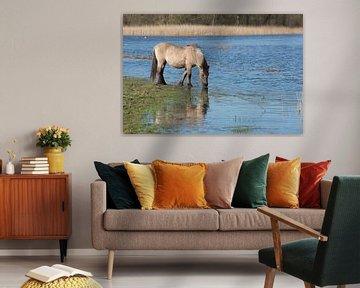Konikpaard bij het water van Barbara Brolsma