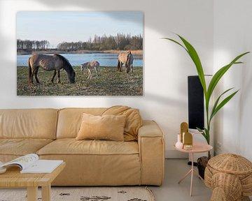 Konikpaarden en hun veulen van Barbara Brolsma