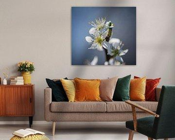 Spring Blossom sur Alex Hiemstra