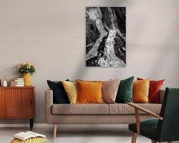 boom en wortelkunst van Carola Vanos