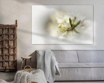 Weisse Blüte von Jacqueline Gerhardt