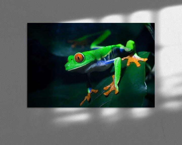 Sfeerimpressie: Red-Eyed Treefrog van Martijn Smeets