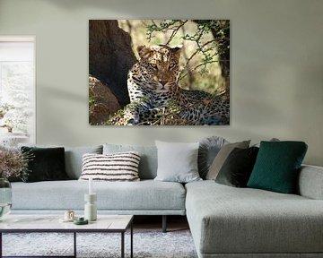 Luipaard Namibië von Annie Lausberg-Pater