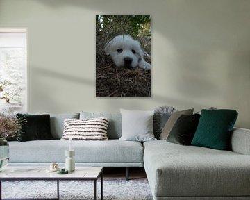 Hond van P.D. de Jong
