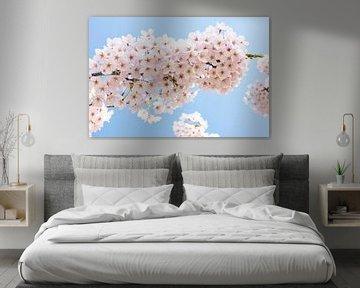 prunus Blüte von eric van der eijk