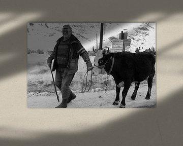 Man met koe von P.D. de Jong