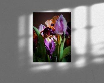 Uitgebloeide tulpen von Iris Hols