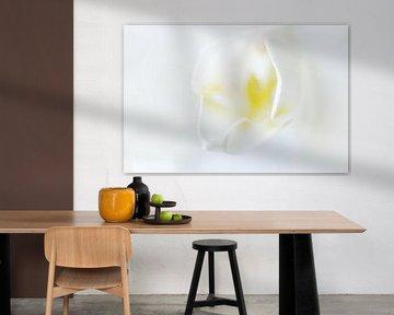 Orchidee  von Margreet Frowijn