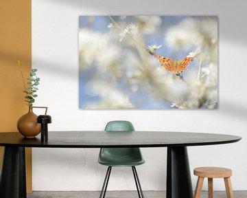 Orange Schmetterling im weisse Umgebung von Klaas Dozeman