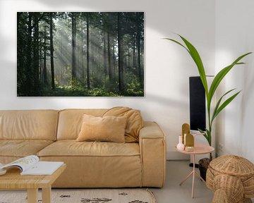 Zonnestralen in bos in de herfst van Klaas Dozeman