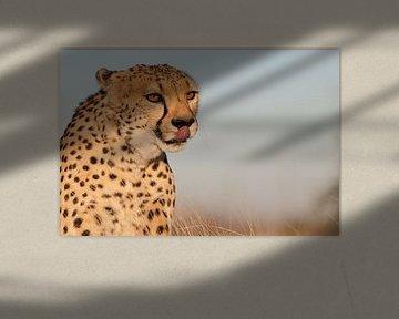 Cheetah - Big Cat van Babs Boelens