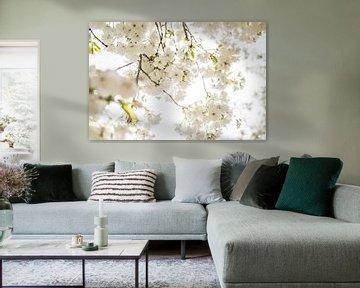 Blüte von Antoine Ramakers