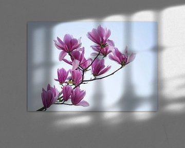 Magnolia Tak von Charlene van Koesveld