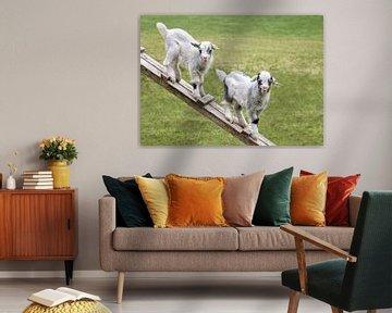 Zwei jungen Ziegen in der Wiese (in Farben) von Christa Thieme-Krus