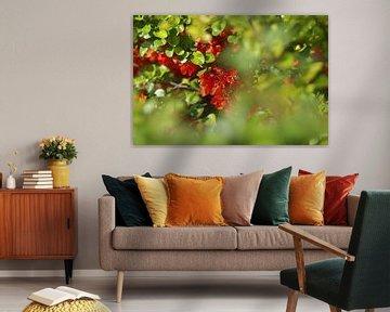 Rode bloemen von Marianna Pobedimova