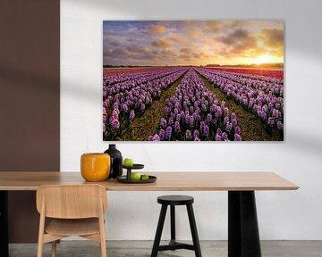 Bloeiende Hyacinthen von Martijn van der Nat