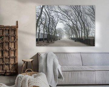'Bomenlaan', Chicago van Martine Joanne