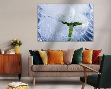Bellis in kristallklarem Eis von Marc Heiligenstein