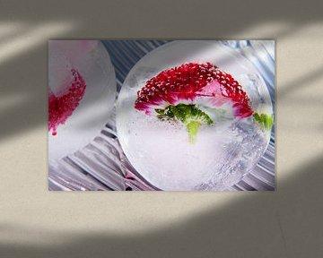 Bellis in kristallklarem Eis 3 von Marc Heiligenstein