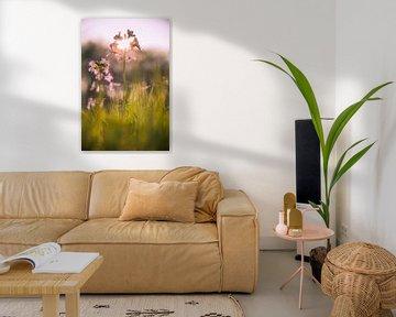 Pinksterbloem in de ondergaande zon van Stan Loo