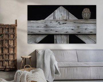 De steenuil op het oude hek van Michael Kuijl
