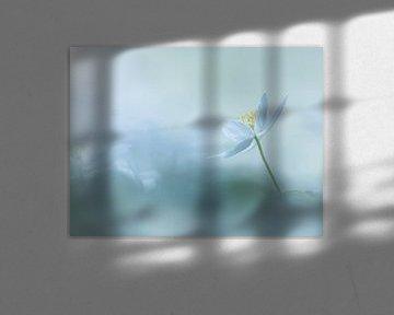 Heavenly Blue von Jacqueline Heemskerk