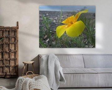 Geel bloempje bij de zee von Cristel Veefkind-Gous