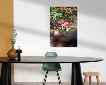 Herfstlandschap met vliegenzammen van Fotografiecor .nl