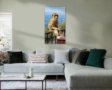 Chilling monkey van Mika'il Photography