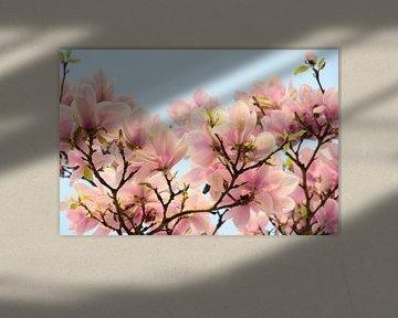 Roze bloemen van de Magnolia lentebloesem van Jessica Berendsen