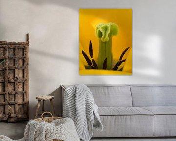 Yellow flower von Edzo Boven