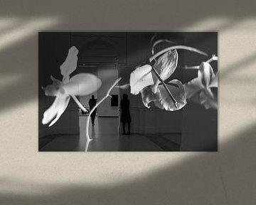 Orchidee dag von Marianna Pobedimova