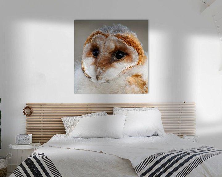 Impression: Barn Owl sur Martzen Fotografie