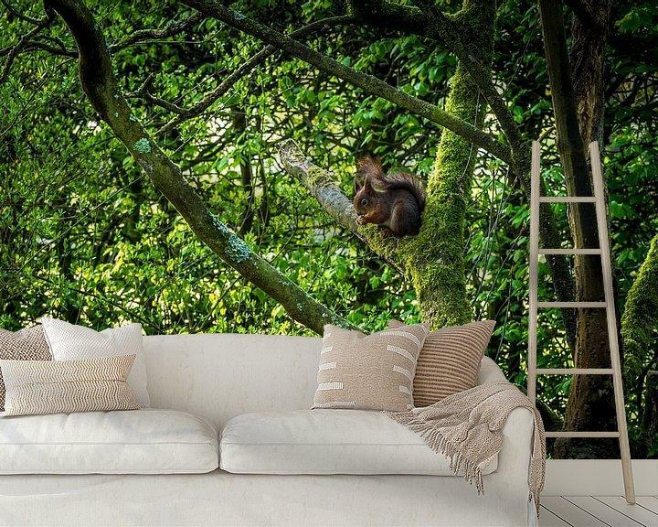 Sfeerimpressie behang: Eekhoorn met nootje van Jaap Mulder