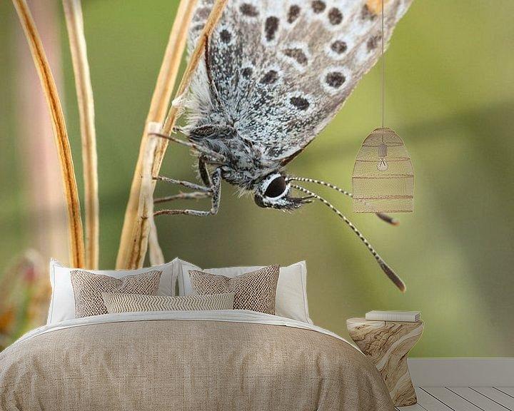 Impression: Icarus butterfly sur Martzen Fotografie