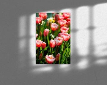 Tulpen V von Rob van der Post