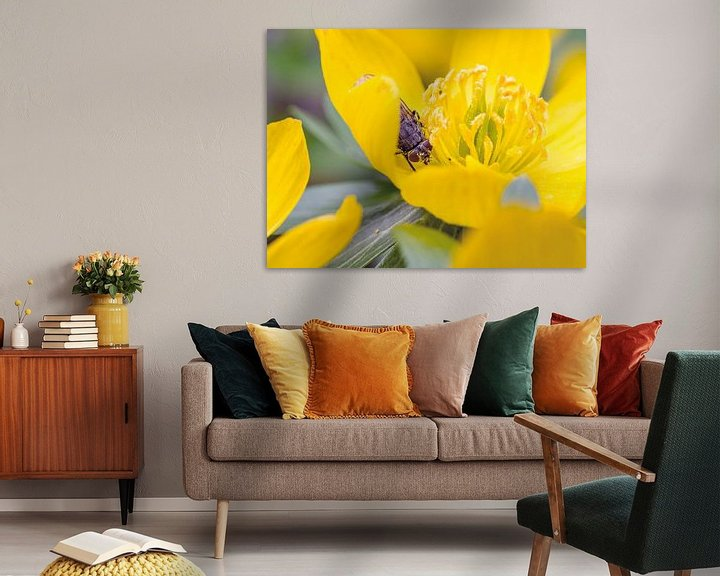 Beispiel: Vlieg in gele winterakoniet von Raymond Schrave