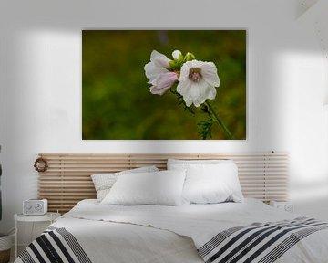 berm bloempje van Raymond Schrave