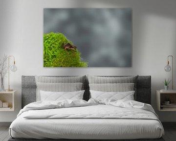 Kleiner Grasfrosch (Rana temporaria) von Ursula Di Chito