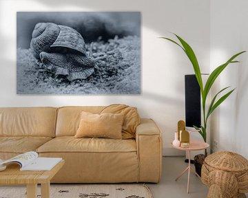 Vineyard snail van Ursula Di Chito