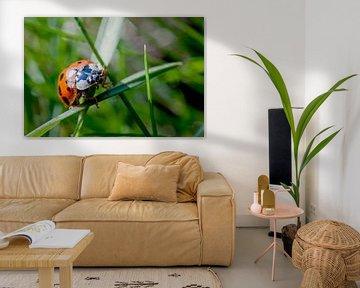 Lieveheersbeestje in het gras von Raymond Schrave