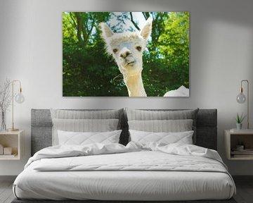charming alpaca von Louisa Hoenstok