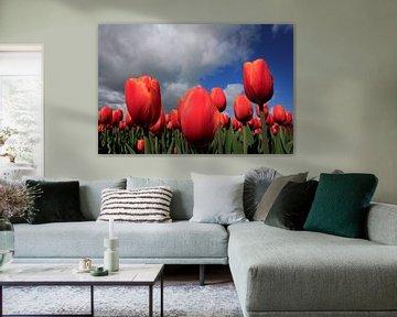 Tulpen in de wolken von Pamela Fritschij