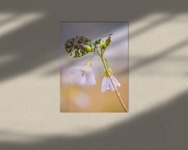 Sfeerimpressie: Vlinder op pinksterbloem van Lex Schulte