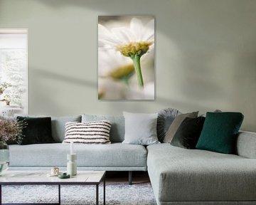 Bloemen von Joop Snijder