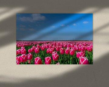 Tulpen in de Flevopolder von Han Kedde