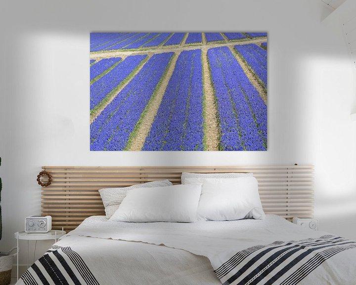 Sfeerimpressie: Veld druifhyacinten - blauwe druifjes met paden  van Ronald Smits